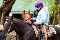 Far Right before galloping a mile and a half with Laura Moquett aboard in preparation for the Kentucky Derby at Churchill Downs in Louisville, Kentucky.