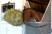 Birdatthewire in her stall after walking the shedrow in preparation for the Kentucky Oaks at Churchill Downs.