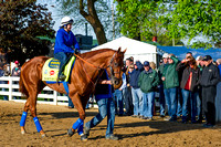 Dortmund, winner of the Santa Anita Derby in his last start and undefeated, prepares for the Kentucky Derby at Churchill Downs in Louisville, Kentucky.