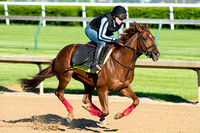 Far Right galloped a mile and a half with exercise rider Laura Moquett in preparation for the Kentucky Derby.