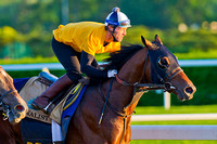 Tonalist puts in his final breeze over the Belmont Park race track in preparation for the  146th Belmont Stakes at Belmont Park in New York.