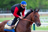 American Pharoah has a final gallop in preparation for the Preakness Stakes at Pimlico Race Course in Baltimore, Maryland.