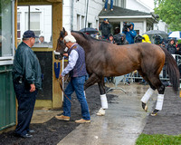 Breeders' Cup (GI) winner and entrant in the Metropolitan Handicap, Bayern arrives with American Pharoah at Belmont Park in Elmont, New York.