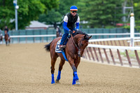 American Pharoah gallops in preparation for the Belmont Stakes (GI) and the chance to become only the 12th horse to win the Triple Crown.