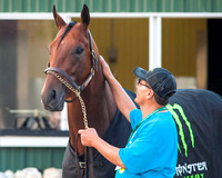 Hot Walker Juan Ramirez soothes American Pharoah after winning the 147th Belmont Stakes (GI) and becoming the 12th horse to win the Triple Crown.