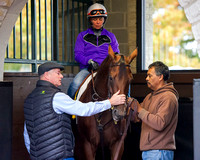 Beholder schools in the Keeneland paddock in preparation for the Breeders' Cup Classic (GI).
