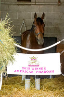 Triple Crown Champion American Pharoah, trained by Bob Baffert, and entered for the Breeders' Cup Classic (GI) stayed in the barn and walked shedrow under tack at Keeneland Race Course, in Lexington,