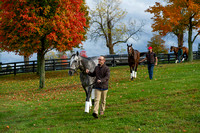 Scenes from Breeders' Cup week at Keeneland Race Course in Lexington Kentucky.