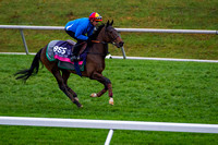 Illuminate, trained by Richard Hannon, gallops on the turf course at Keeneland Race Course in preparation for the Breeders' Cup Juvenile Fillies Turf (GI).