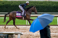 Last Waltz, trained by David Wachman, gallops during a rainstorm in preparation for the Breeders' Cup Juvenile Fillies Turf.