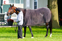 Overanalyze checks out his surroundings at Belmont Park in prepa