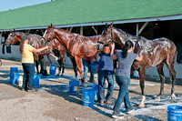 Todd Pletcher's triple threat of (l-r) Gemologist, El Padrino and Broadway's Alibi all getting baths after jogs around the track.
