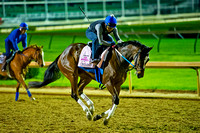 Fair Grounds Oaks winner Untapable is playful on the race track as she prepares for the 140th Kentucky Oaks at Churchill Downs in Louisville, Kentucky.