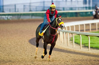 Trinniberg jogs around Churchill Downs in preparation for Kentucky Derby 138.