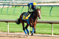 Kentucky Derby 138 contender Bodemeister jogs around the track.
