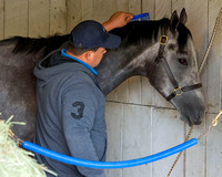 Mohaymen, trained by Kiaran McLaughlin, is groomed after completing morning exercise in preparation for the Kentucky Derby at Churchill Downs in Louisville, Kentucky.