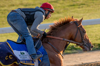 Belmont Stakes contender Governor Malibu, trained by Christophe Clement, gallops at Belmont Park in Elmont, New York.