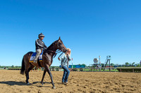 Led by Assistant Trainer Julie Clark, with exercise rider Peedy Landry aboard, Exaggerator gets ready to gallop at Belmont Park in Elmont, New York.