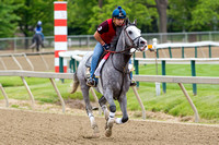 Preakness contender Cherry Wine, trained by Dale Romans, gallops during morning workouts at Pimlico Race Course in Baltimore, Maryland.