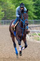 Preakness contender Laoban, trained by Eric Guillot, gallops during morning workouts at Pimlico Race Course in Baltimore Maryland.