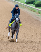 Destin, trained by Todd Pletcher, gallops in preparation for the Kentucky Derby in Louisville, Kentucky.