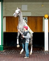 Creator, trained by Steve Asmussen, misbehaves while schooling in the paddock in preparation for the Kentucky Derby at Churchill Downs in Louisville, Kentucky.