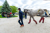 Preakness contender Lani, trained by Mikio Matsunaga, arrives at Pimlico Race Course in Baltimore Maryland.