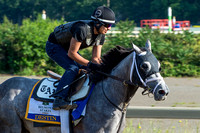 Belmont Stakes contender Destin, trained by Todd Pletcher, gallops on the training track at Belmont Park in Elmont, New York.