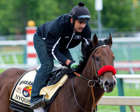 Preakness favorite Nyquist, with Jonny Garcia aboard, and trained by Doug O'Neill, gallops at Pimlico Race Course in Baltimore, Maryland.