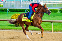 Pablo Del Monte gallops in preparation for the 140th Kentucky Derby.