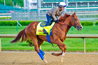 Chitu galloped 1 & 1/2 miles in preparation for the 140th Kentucky Derby.