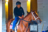My Miss Sophia walks the shed row after exercising over the Churchill Downs track in preparation for the 140th running of the Kentucky Oaks.