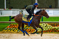Bayern gallops in preparation for the 139th Preakness Stakes at Pimlico Race Course in Baltimore, Maryland.