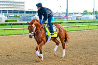 Danza galloped 1 & 3/8's miles in prpearation for the 140th Kentucky Derby.