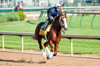 Kentucky Derby 138 contender El Padrino jogs around the track.