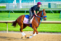 Sugar Shock jogs on the main track at Churchill Downs in preparation for the 140th Kentucky Oaks.