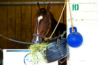 Vinceremos enjoys his hay after preparations for the 140th Kentucky Derby at Churchill Downs in Louisville, Kentucky.