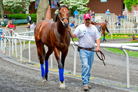 Derby Trial winner Embellishing Bob schools in the paddock in preparation for the Woody Stephens Stakes on Belmont Stakes day at Belmont Park in New York.