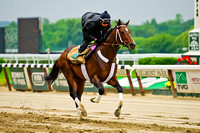 Belmont Stakes 146 contender and Kentucky Derby 140 runner up Commanding Curve, gallops at Belmont Park in New York.