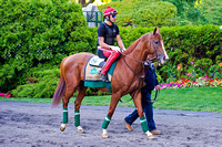 Belmont Stakes and Triple Crown contender California Chrome puts in final preparations at Belmont Park in New York.