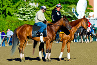 Beholder tours the race track in preparation for the for the Ogden Phipps Stakes on Belmont Stakes Day at Belmont Park in New York.