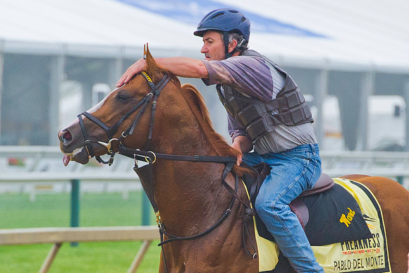 Pablo Del Monte gallops at Pimlico Race Course in Baltimore, Maryland, in preparation for the 139th Preakness Stakes.