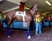 American Pharoah schooled in the paddock in preparation for the Preakness Stakes at Pimlico Race Course in Baltimore, Maryland.