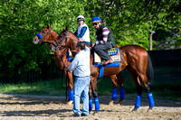 American Pharoah and stablemate Dortmund wait for the track to open in preparation for the Preakness Stakes at Pimlico Race Course in Baltimore, Maryland.