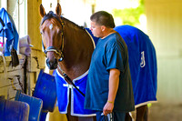Belmont Stakes 146 contender Wicked Strong walks shedrow with his groom Francisco Ugarte at Belmont Park in New York.