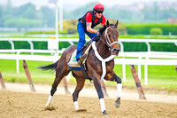 Ride On Curlin gallops in preparation for the 146th Belmont Stakes at Belmont Oark in New York.