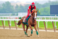 Belmont Stakes and Triple Crown contender California Chrome puts in his daily gallop around the Belmont Park race track in New York.