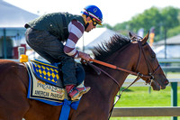 American Pharoah galloped over the racetrack for the first time since arriving in preparation for the Preakness Stakes at Pimlico Race Course in Baltimore, Maryland.