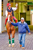 California Chome enters the paddock at Churchill Downs for schooling in preparation for the 140th Kentucky Derby.