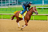 Danza galloped 1 & 3/8 miles in preparation for the 140th Kentucky Derby at Churchill Downs in Louisville, Kentucky.